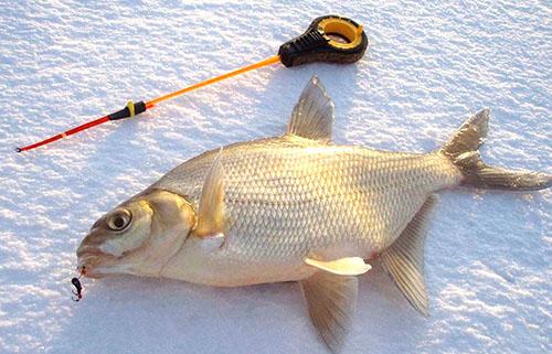 Зимняя рыбная ловля на мормышку